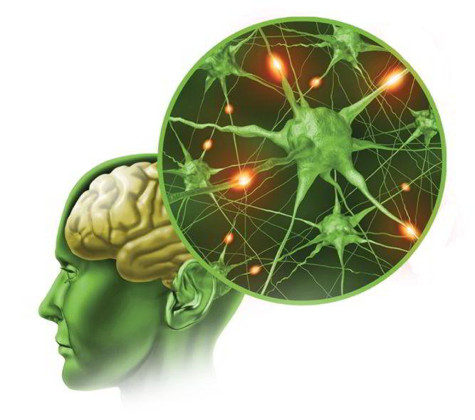 biểu hiện teo não ở người cao tuổi