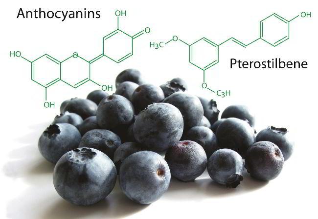 tinh chất blueberry cải thiện chứng đau nửa đầu