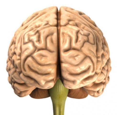 Não bộ quan trọng như thế nào?