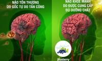 Cảnh giác nguy cơ đột quỵ do xơ vữa động mạch