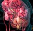 Video Giải pháp trị tận gốc căn nguyên gây suy giảm trí nhớ