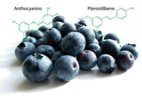OTiV - Khôi phục giấc ngủ tự nhiên nhờ 2 tính chất quý Anthocyanin và Pterostilbene từ Blueberry