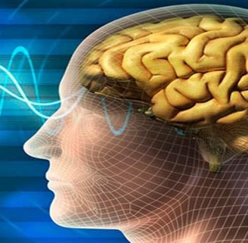 Ginkgo Biloba và sức khỏe não bộ