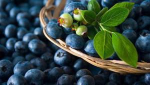 Quả việt quất giúp 'hóa giải' chất béo