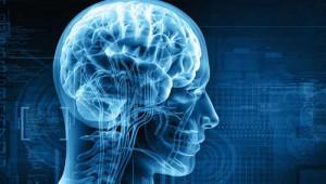Não bộ và giấc ngủ