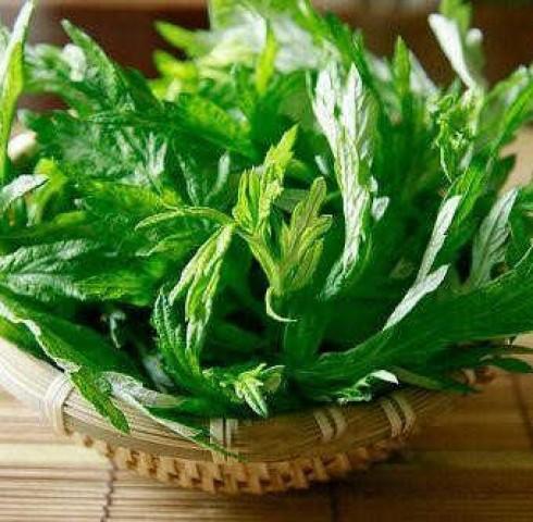 Cẩn trọng khi dùng cây thuốc nam khắc phục bệnh đau đầu